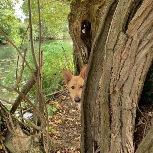 Dog walk at River Meadow Dog Walking