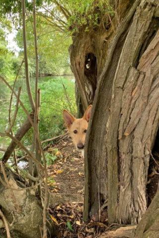 Dog walk at River Meadow Dog Walking photo