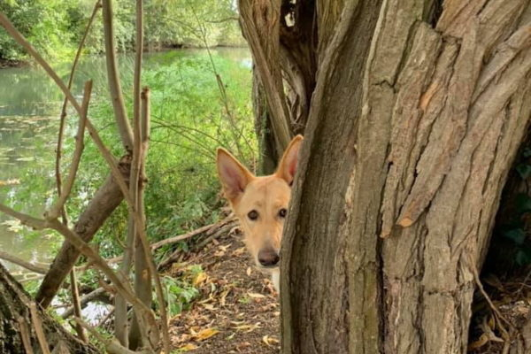 River Meadow Dog Walkingphoto