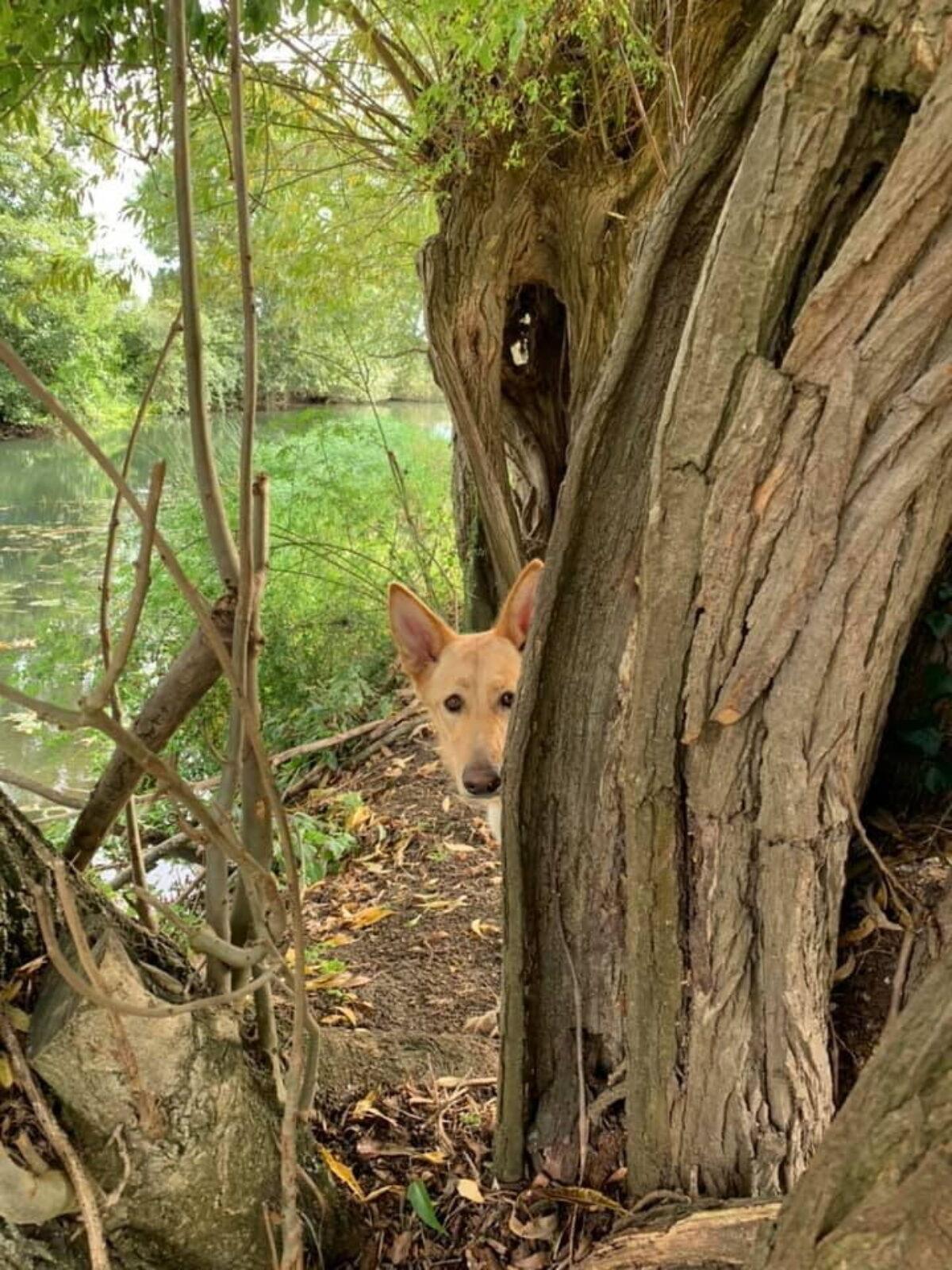 River Meadow Dog Walking large photo 1