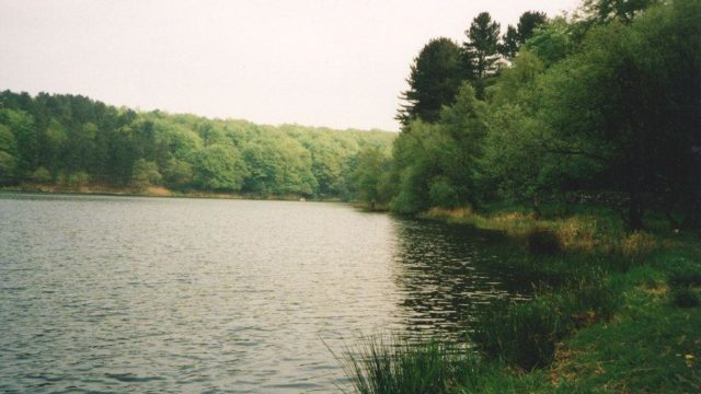 Dog walk at Roddlesworth Reservoirs And Tockholes Plantation