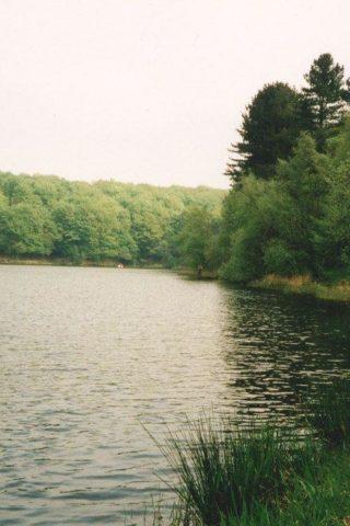Dog walk at Roddlesworth Reservoirs And Tockholes Plantation photo