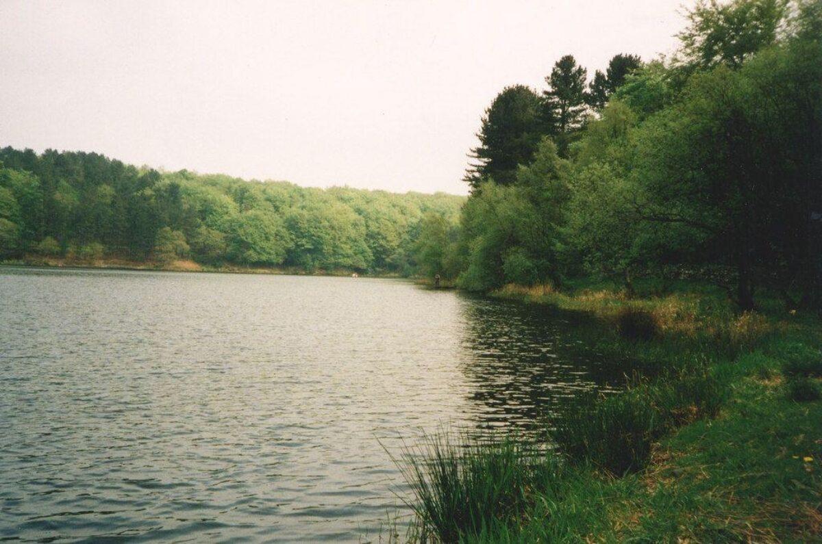 Roddlesworth Reservoirs And Tockholes Plantation large photo 1