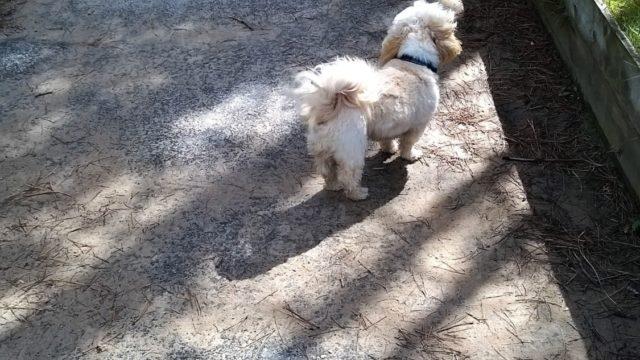 Dog walk at Roseisle