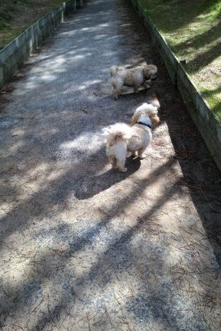 Dog walk at Roseisle photo