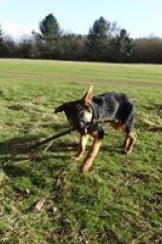 Dog walk at Rotherwick photo