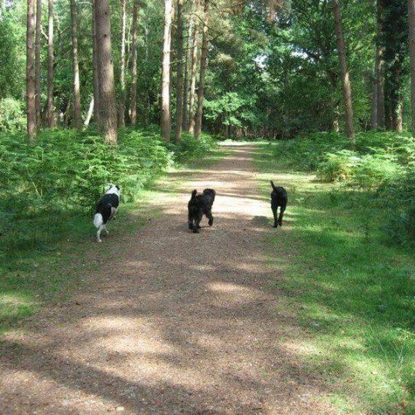 Dog walk at Royal Victoria Country Park