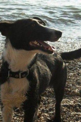 Dog walk at Royal Victoria Country Park photo