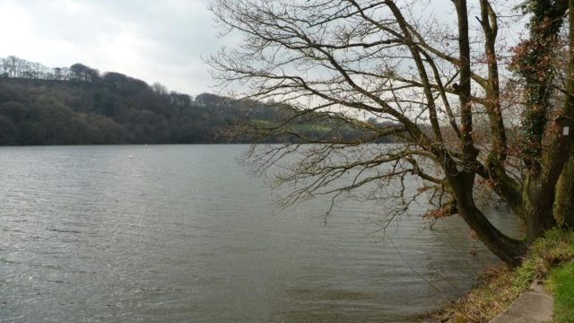 Dog walk at Rudyard Lake