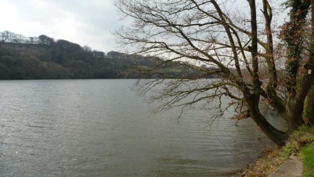 Dog walk at Rudyard Lake