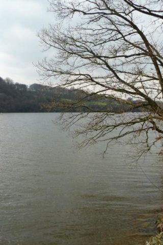 Dog walk at Rudyard Lake photo