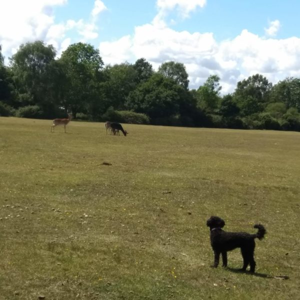 Dog walk at Rufus Stone - Stoney Cross, New Forest