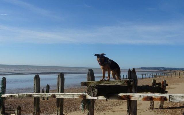 Rye Harbor Dog walk in Sussex (East)