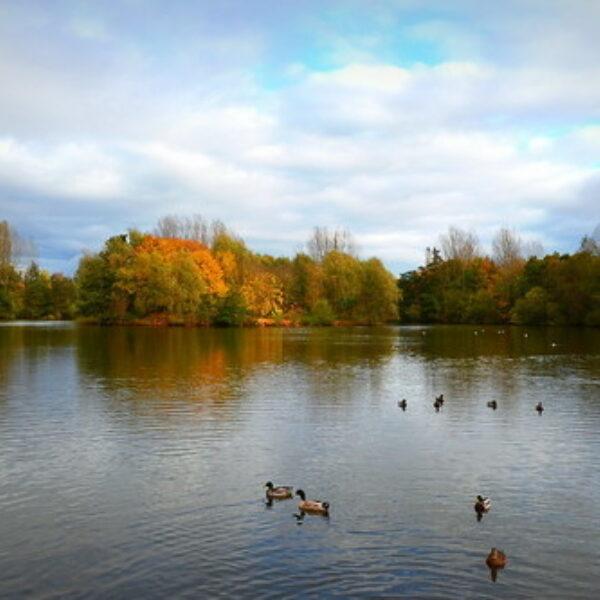 Dog walk at Ryton Pools Country Park