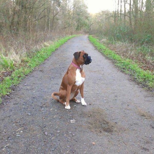Dog walk at Salcey Forest