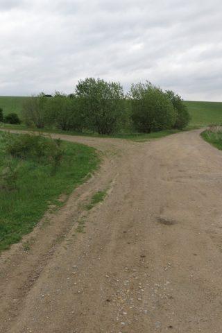 Dog walk at Salisbury Plain photo