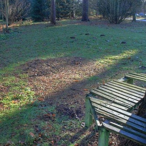 Dog walk at Sandringham Country Park