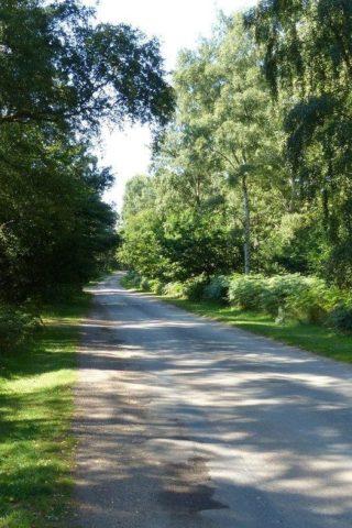 Dog walk at Sandringham Country Park photo