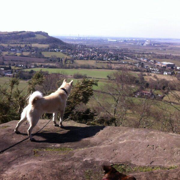 Dog walk at Sandstone Trail