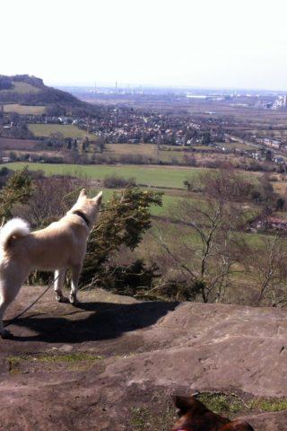 Dog walk at Sandstone Trail photo