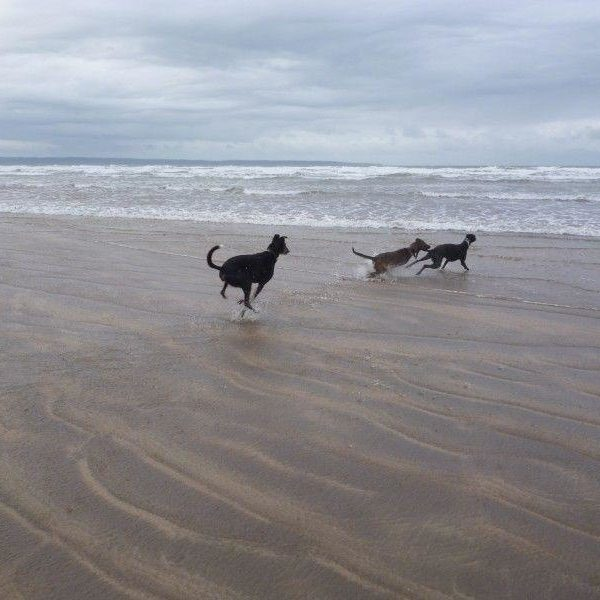 Dog walk at Saunton Sands