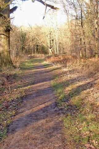 Dog walk at Savernake Forest photo