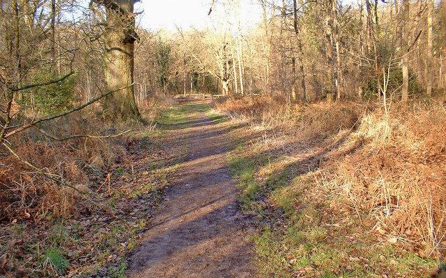 Savernake Forest Dog walk in Wiltshire
