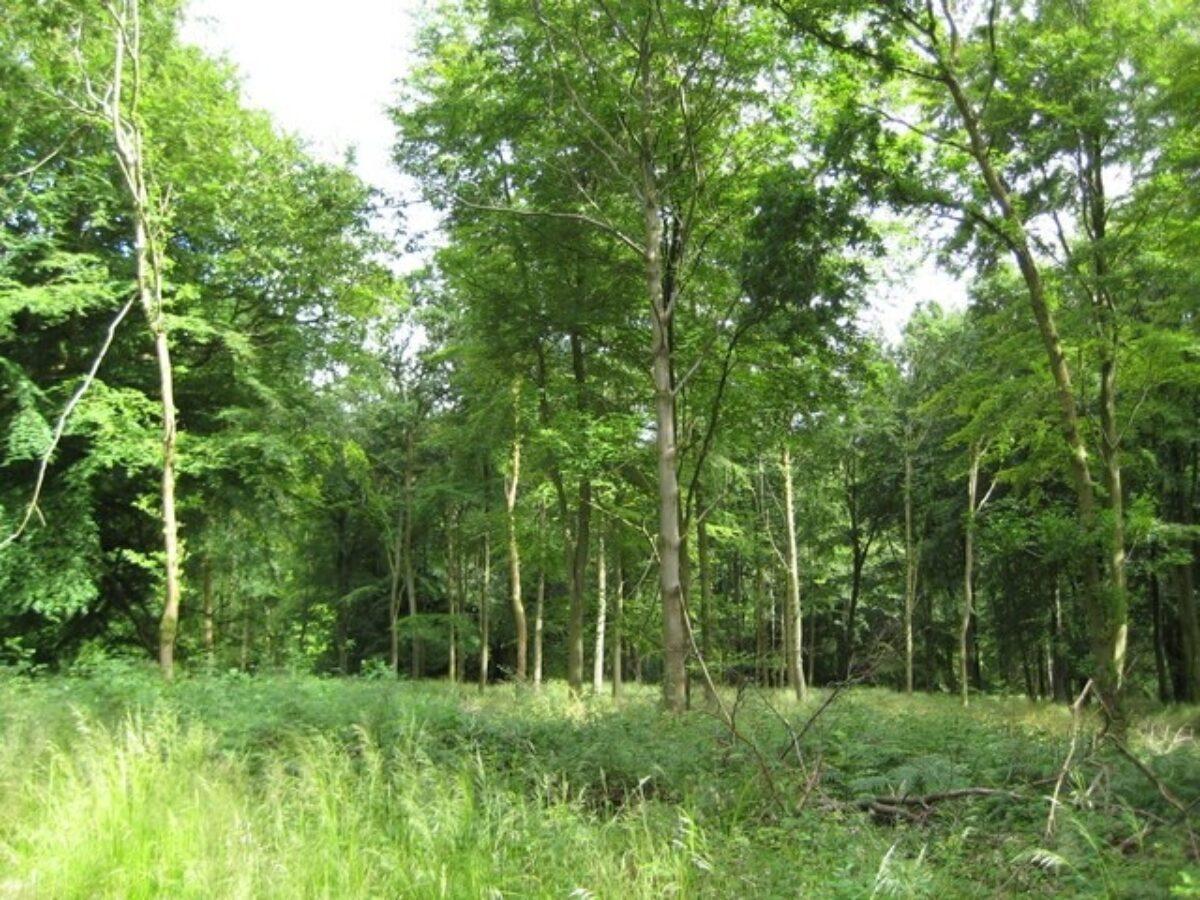 Savernake Forest large photo 2