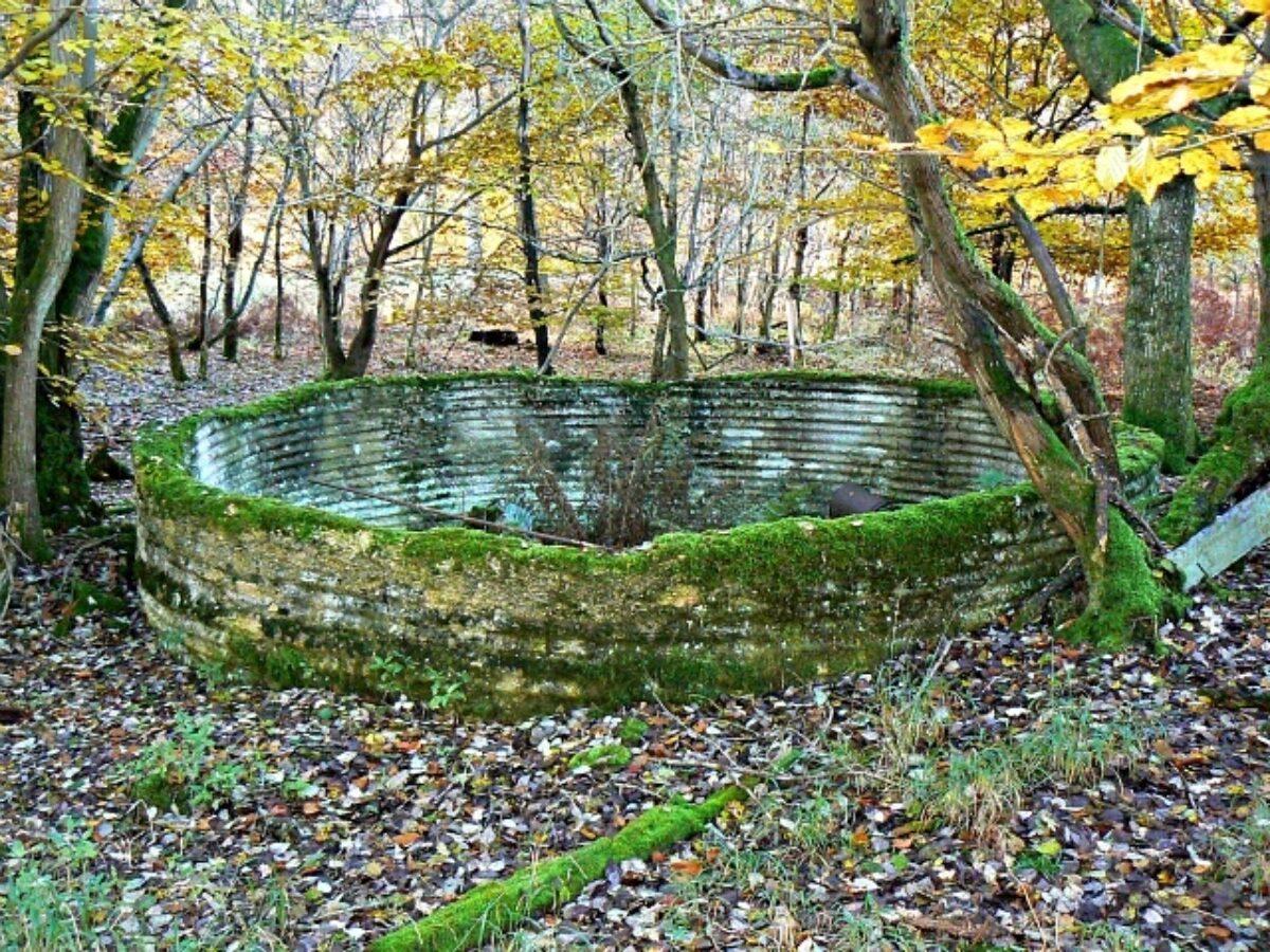 Savernake Forest large photo 3