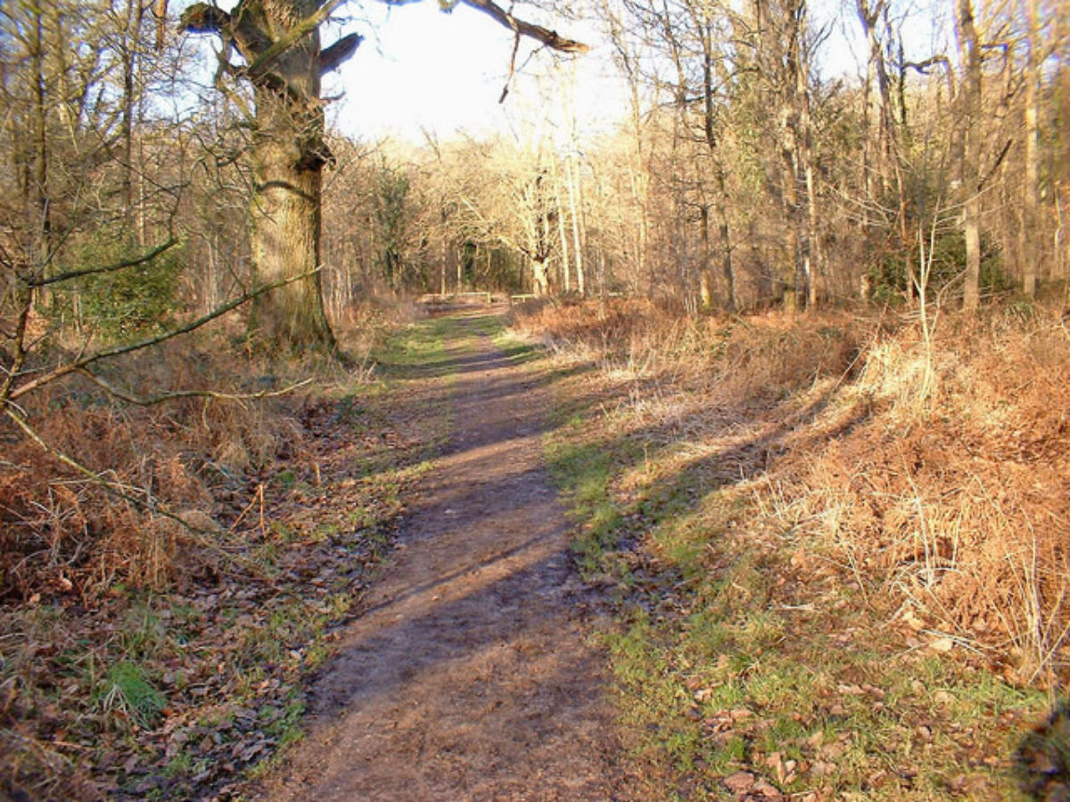Savernake Forest large photo 1