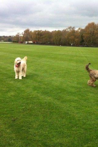 Dog walk at Savill Garden & Polo Fields photo