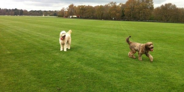Savill Garden & Polo Fields