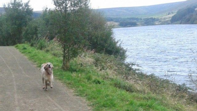 Dog walk at Scammonden Dam