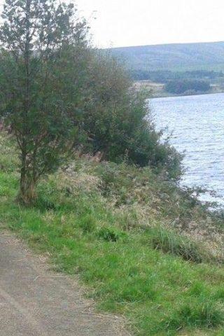 Dog walk at Scammonden Dam photo