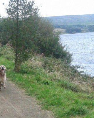 Dog walk at Scammonden Dam