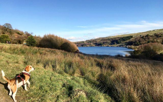 Scammonden Reservoir Dog walk in Yorkshire (West)