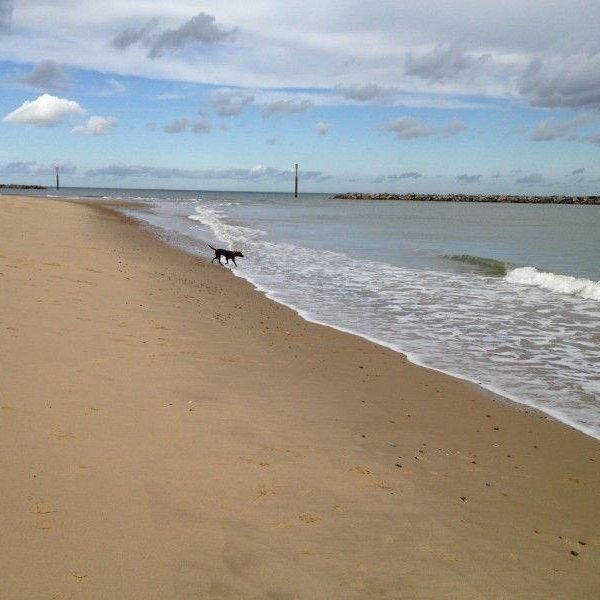 Dog walk at Sea Palling Beach