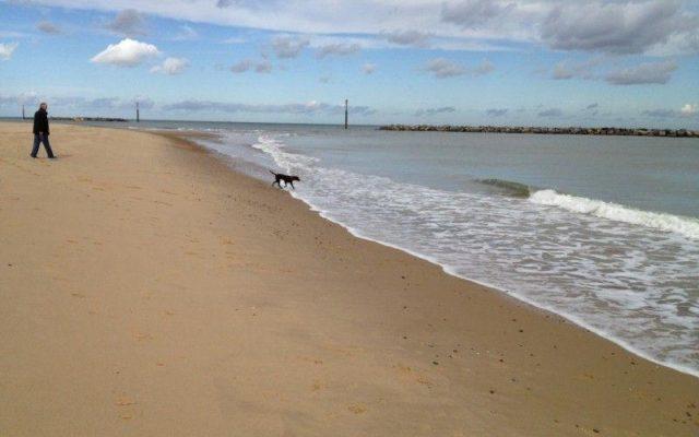 Sea Palling Beach Dog walk in Norfolk