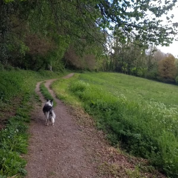 Dog walk at Selborne Lythe and Priory