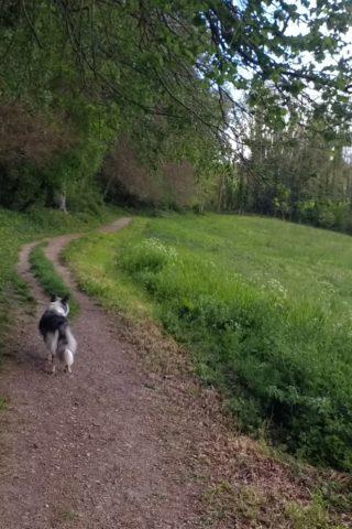 Dog walk at Selborne Lythe and Priory photo