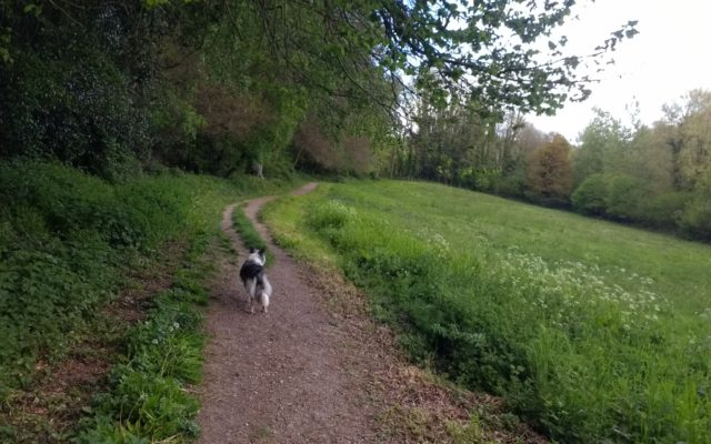 Selborne Lythe and Priory Dog walk in Hampshire