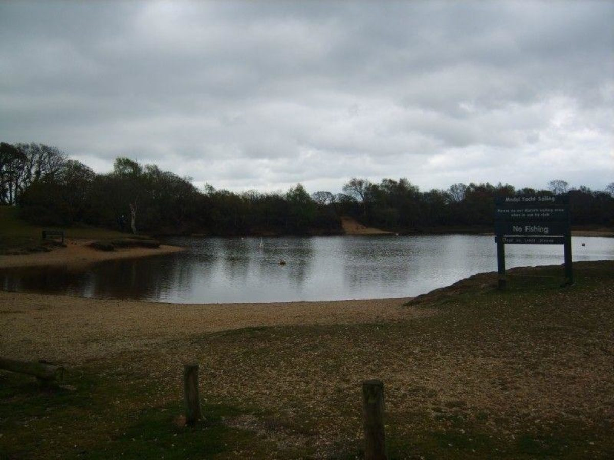 Setley Pond (New Forest) large photo 2