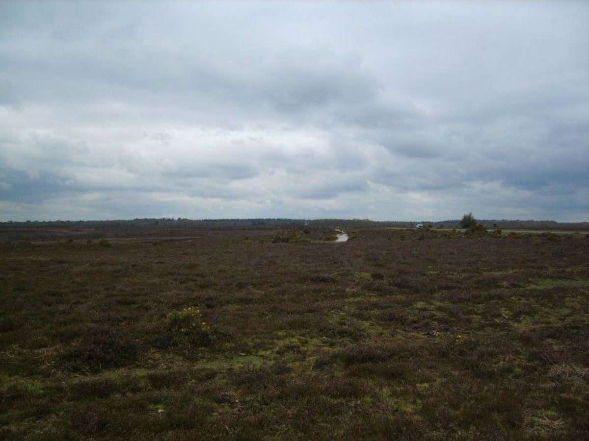 Setley Pond (New Forest) large photo 6
