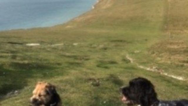 Dog walk at Seven Sisters