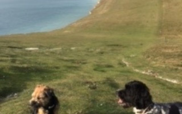 Seven Sisters Dog walk in Sussex (East)