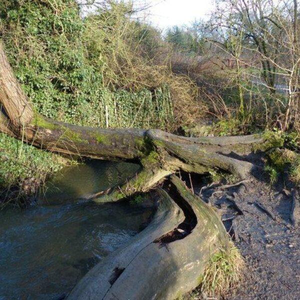Shady Lane Arboretum photo 3