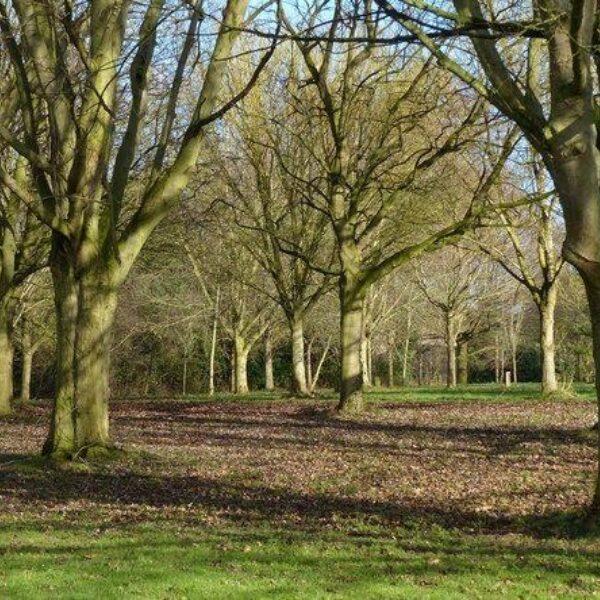 Shady Lane Arboretum photo 4