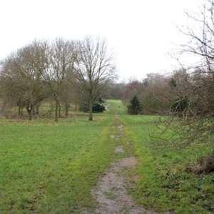 Shady Lane Arboretum