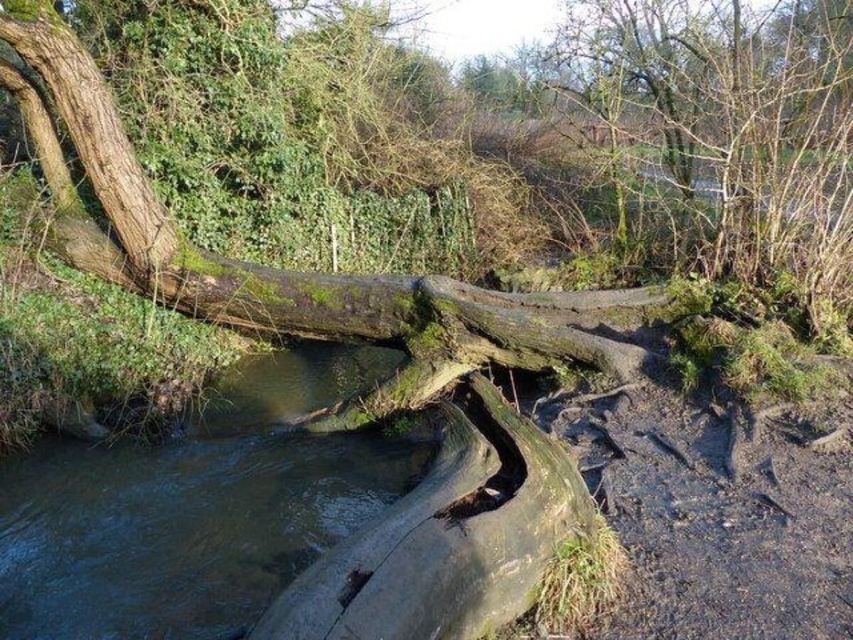Shady Lane Arboretum large photo 3