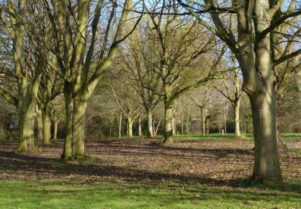 Shady Lane Arboretum large photo 4